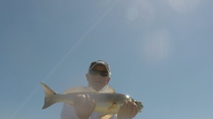 SMredfish